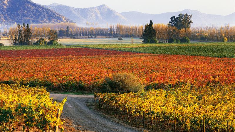 Siete viñas chilenas entre las mejores del mundo para visitar